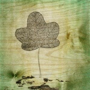 green leaf Kevin A Erhard