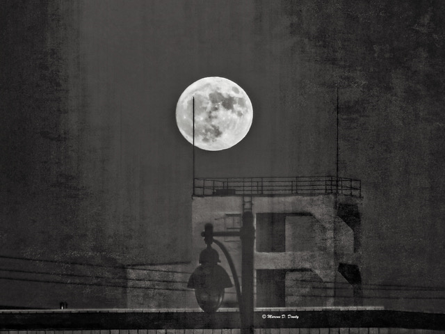 moon over brewery Marcus Dowty